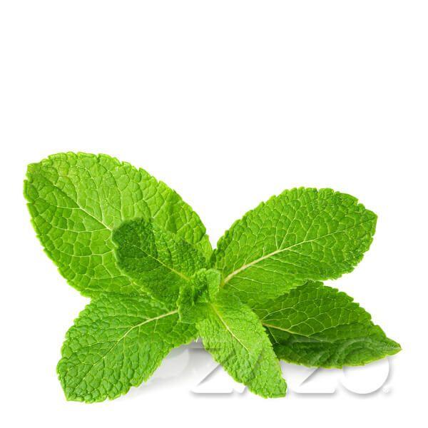 Zazo E-Liquid Mint 10ml