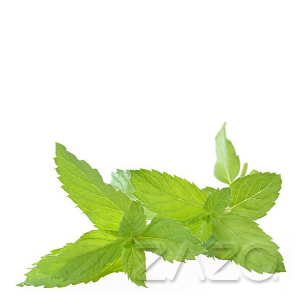 Zazo E-Liquid Peppermint 10ml